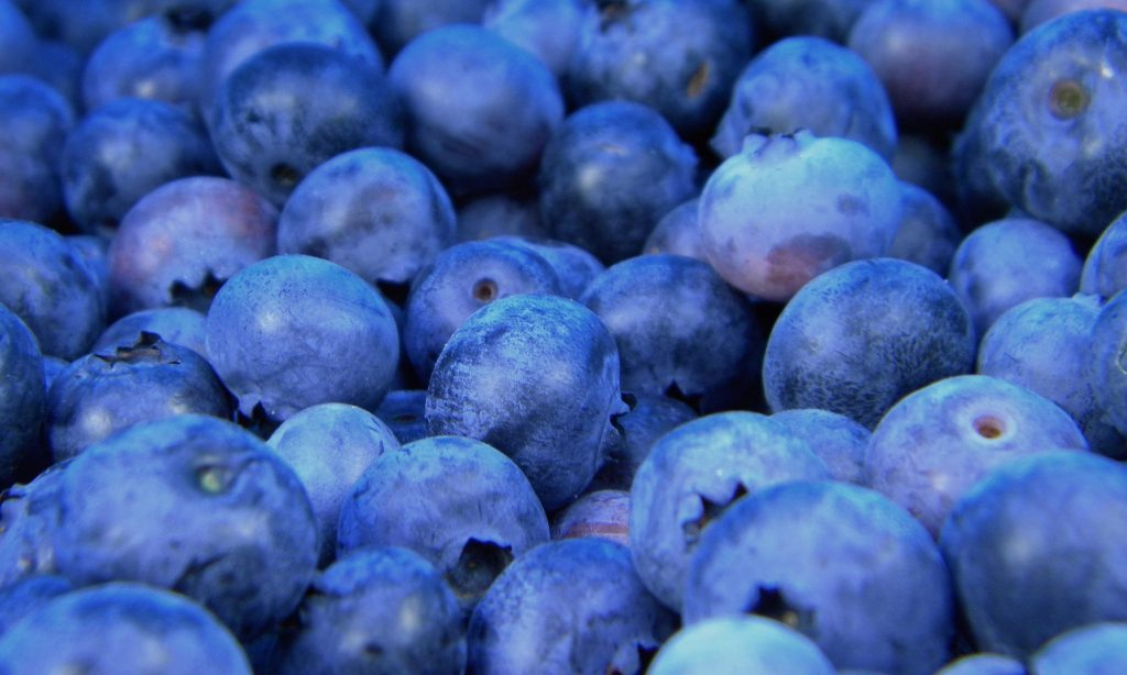 Image of blueberries courtesy of Katie Chase/ Unsplash.
